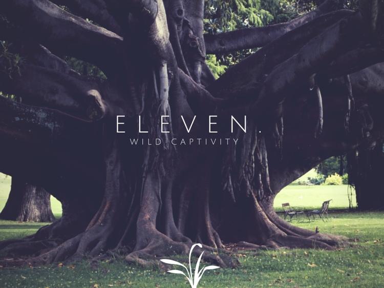 Eleven. (1)
